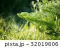 シダ 葉 自然の写真 32019606