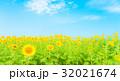 夏待ち 32021674