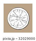 グレープフルーツ 半分 平面図のイラスト 32029000