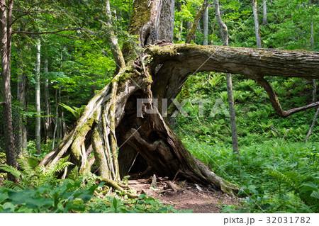 木の画像 - フリー写真素材 Futta.NET