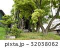 雲龍神社のクスノキ(愛知県名古屋市) 32038062