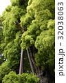 雲龍神社のクスノキ(愛知県名古屋市) 32038063