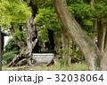雲龍神社のクスノキ(愛知県名古屋市) 32038064