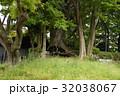 雲龍神社のクスノキ(愛知県名古屋市) 32038067