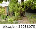 雲龍神社のクスノキ(愛知県名古屋市) 32038075