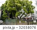 雲龍神社のクスノキ(愛知県名古屋市) 32038076