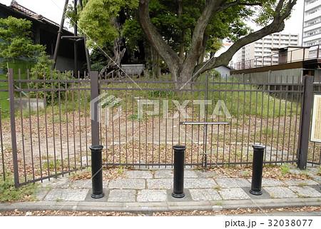 雲龍神社のクスノキ(愛知県名古屋市) 32038077