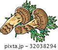 ベクター 松茸 秋の味覚のイラスト 32038294