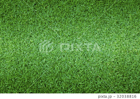 grass background Golf Courses green lawn 32038816