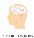 脳みそ 脳 頭脳のイラスト 32040465