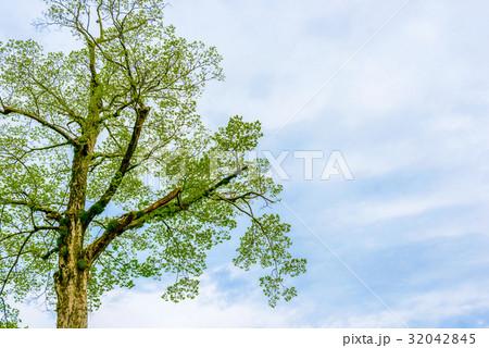 木と空と雲 32042845