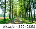 並木 並木道 木の写真 32042868