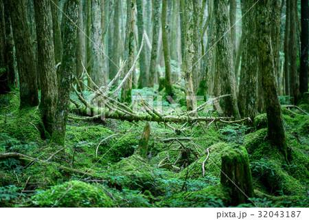 苔の森 32043187