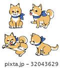 柴犬 32043629
