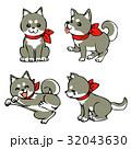 黒柴犬 32043630