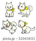 白柴犬 32043631