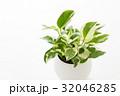 観葉植物 32046285