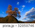 平堂壇の桜  32050746