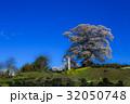 七草木天神桜 32050748