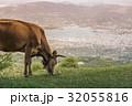 ウシ 牛 放牧の写真 32055816