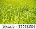 稲 32068684