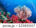 サンゴ 珊瑚 水中の写真 32069347