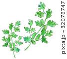 パクチー 野菜 32076747