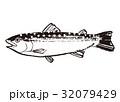 いわな 水彩画 水墨画のイラスト 32079429