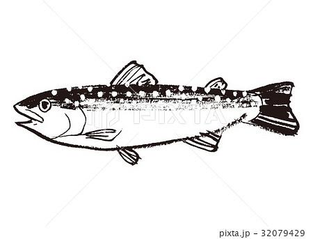 いわな 岩魚 水彩画 水墨画 32079429