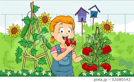 Kid Girl Garden Eat Tomato 32080542