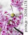 鳥 バーディー 小鳥の写真 32081178