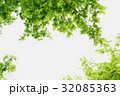 新緑の木漏れ日 32085363