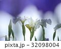 神楽女湖のショウブ 32098004