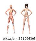 女性 解剖 筋肉 3DCG イラスト素材 32109506