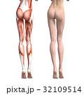 筋肉 人体 解剖のイラスト 32109514