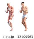 筋肉 人体 解剖のイラスト 32109563