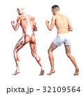筋肉 人体 解剖のイラスト 32109564