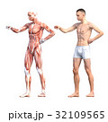 筋肉 人体 解剖のイラスト 32109565