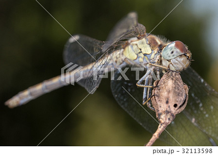 A close-up of a beautiful dragonfly 32113598