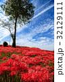 彼岸花 ヒガンバナ 青空の写真 32129111