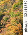 紅葉 秋 林の写真 32144880