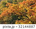 紅葉 秋 木の写真 32144887
