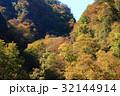 紅葉 秋 木の写真 32144914