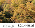 紅葉 黄葉 秋の写真 32144916