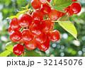 さくらんぼ サクランボ 32145076
