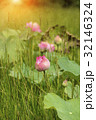 きれい 綺麗 花の写真 32146324