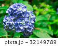 紫陽花 32149789
