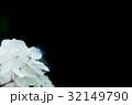 紫陽花 32149790