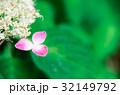 紫陽花 32149792