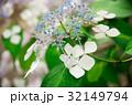 紫陽花 32149794